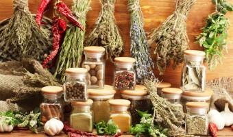 Brenda's Herbal Dewormer